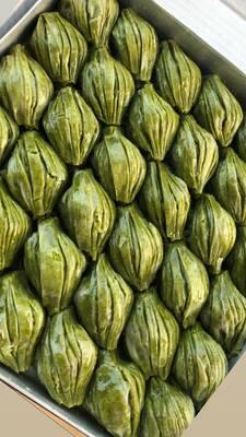 Yeşil Midye